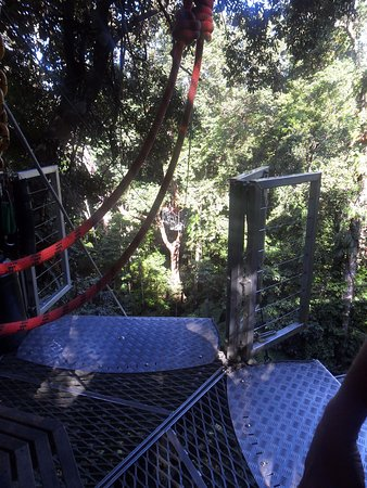 Cape Tribulation, Australien: looking from one platform to the next