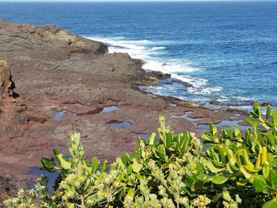 Bushrangers Bay Walk - Picture of Bass Point Reserve ...