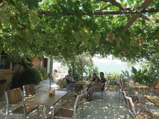 Polemi, Cyprus: Olive Tree is the name, but a very lovely vine