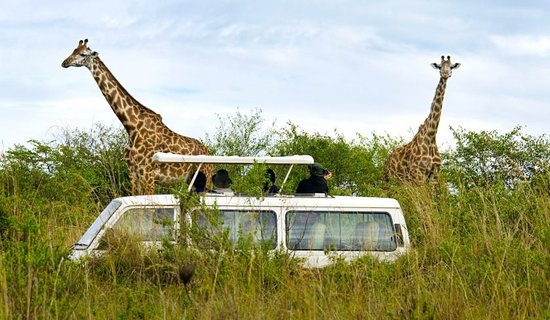 Nakuru, Kenya: amzing maasai mara 2day 1 night itinerary
