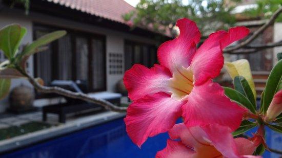 Sindhu Mertha Suite: Aesthetic surrounding the hotel