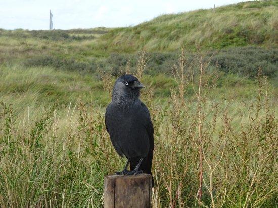 -VVV Wandeling door de duinen van Katwijk aan Zee-