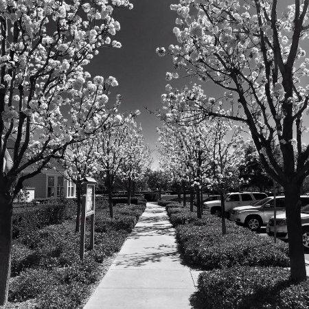 Temecula, Califórnia: photo2.jpg