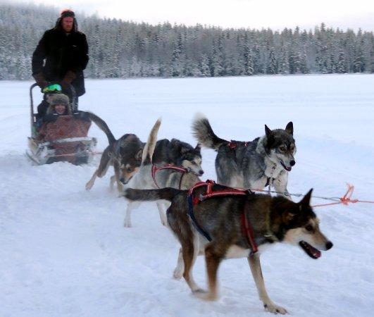 Soulmate huskies husky ride in Mount Ritavaara in Pello in Finnish Lapland