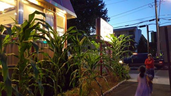 Saugerties, Estado de Nueva York: What's with the corn?
