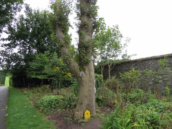 Ardgillan Castle: quirky tree