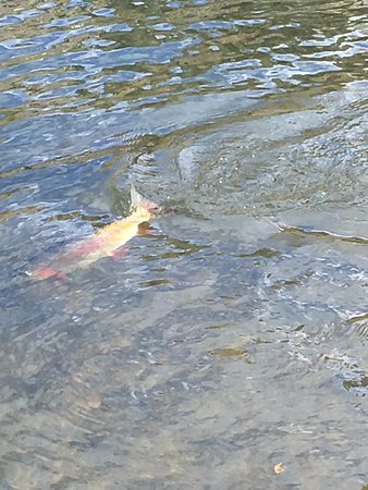 Saratoga, WY: Fly fishing the North Platt and tributaries