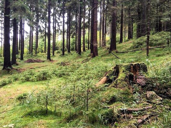 Liberec, Tsjekkia: Les cestou na Ještěd