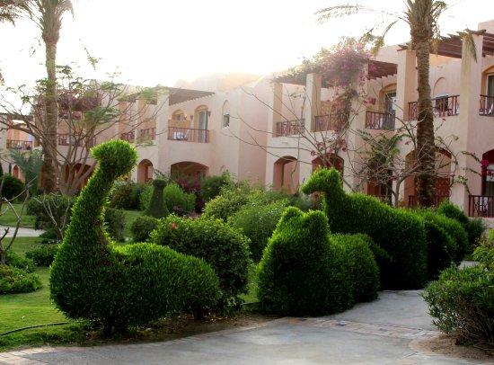 outside - Picture of SUNRISE Royal Makadi Resort, Makadi Bay - Tripadvisor