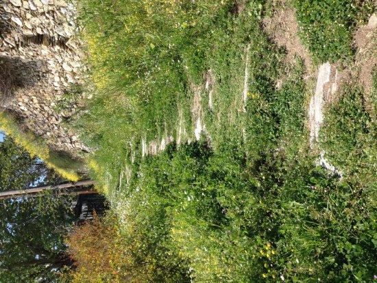 Makrinitsa, Grecia: ΑΡΧΟΝΤΙΚΟ Δταφυλοπατη Καλοκαίρι  άνοιξη  χειμωνας