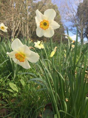 Hamilton, New Zealand: Spring has sprung