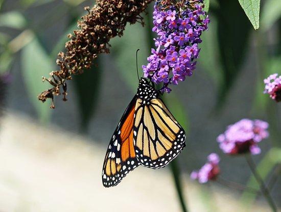 Niles Fernwood Botanical Garden And Nature Preserve