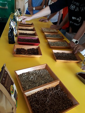 Doka Estate Coffee Tour: Cafes torrados