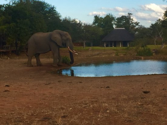 Senalala Luxury Safari Camp: The watering hole out side the hotel (you can see our room in the background)