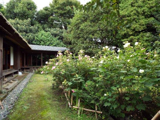 Kaisei-machi, Japón: 庭もなかなか風情がありました。