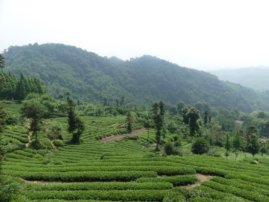 Qionglai, Çin: The tea mountain 花楸茶山, a few kilometers away from Pingle old town