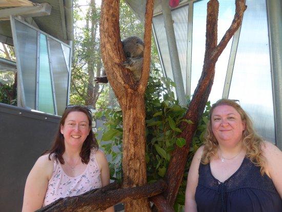 Mosman, Australia: Our Koala Encounter