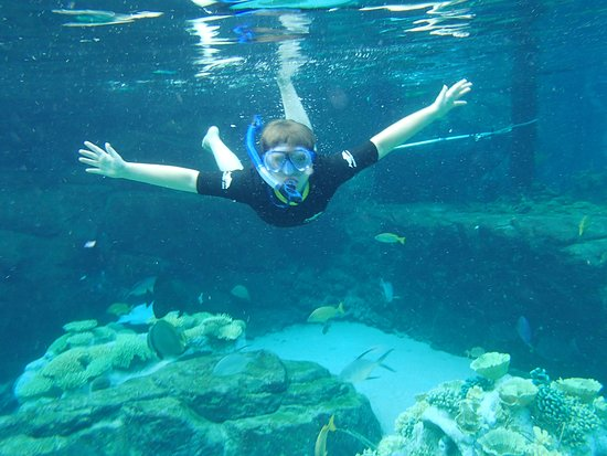 Cabo Discovery: dive in the reef