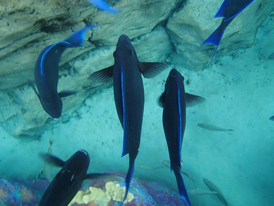 Cabo Discovery: blue fish everywhere