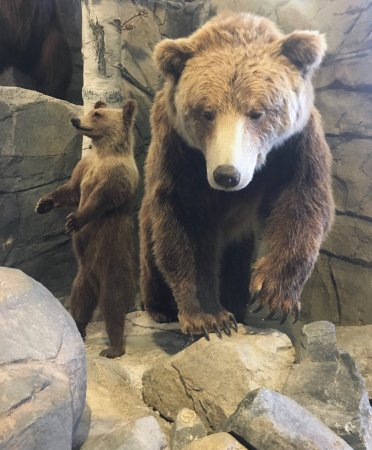 Helena, MT: Learn about grizzlies, their behavior and habitat through the center's many exhibits.