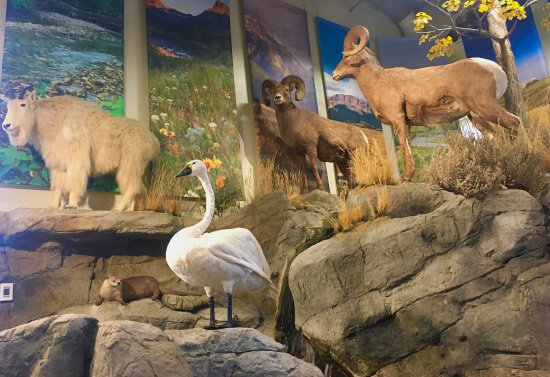 Helena, MT: The education center has many representatives of Montana's diverse wildlife populations.