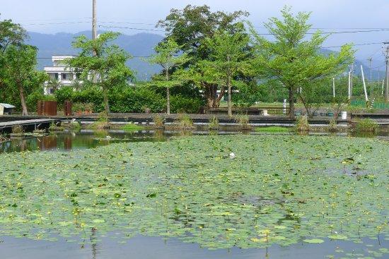 Yuanshan, Yilan: 水生植物