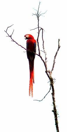 Carate, Costa Rica: Lapas rojas por doquier