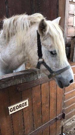 Penryn, UK: Horse.