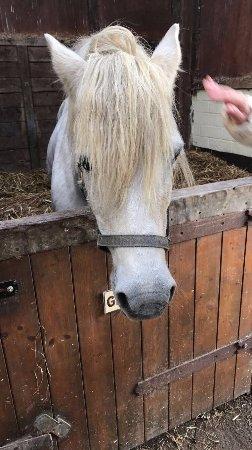 Penryn, UK: Beautiful horse.