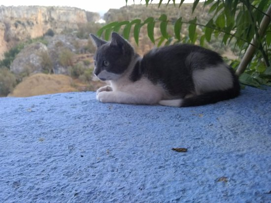 Hotel La Seguiriya: Kitten that won't let you enjoy sitting on the deck, public or private