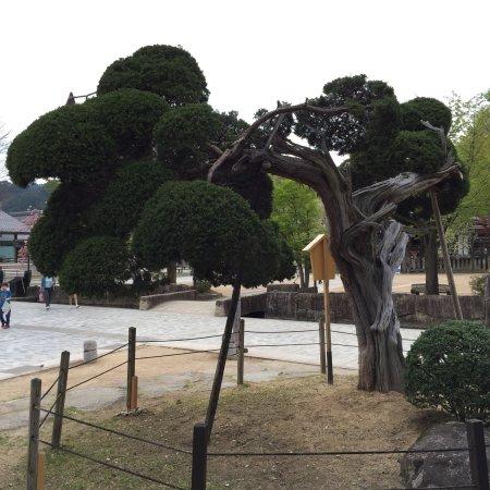 Hida, Giappone: photo9.jpg