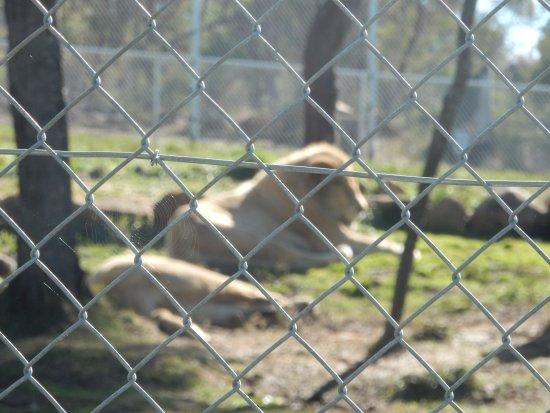 Riverside, Australien:  Tasmania Zoo