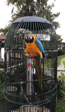 Jacksonville, NC: Jack the Parrot with Captain Bob, owner