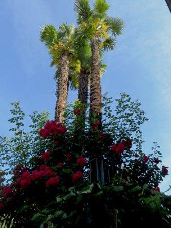 Continental Parkhotel: garden