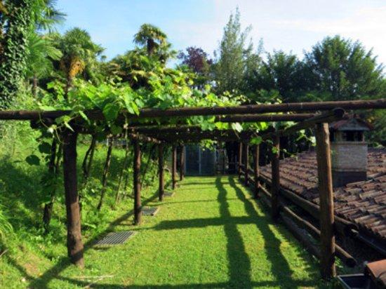 Continental Parkhotel: vineyard