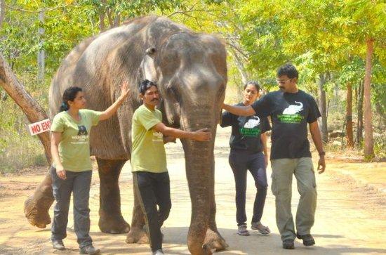 Visit Asia Largest Bear Rescue Center ...