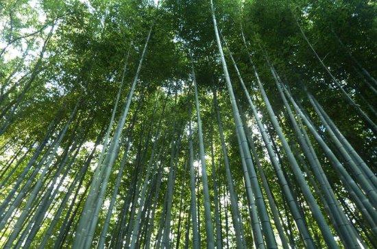 Bali cultuur en bamboebos tour