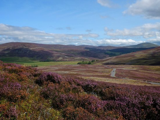 Badenoch and Strathspey, UK: Heather as far as the eye can see