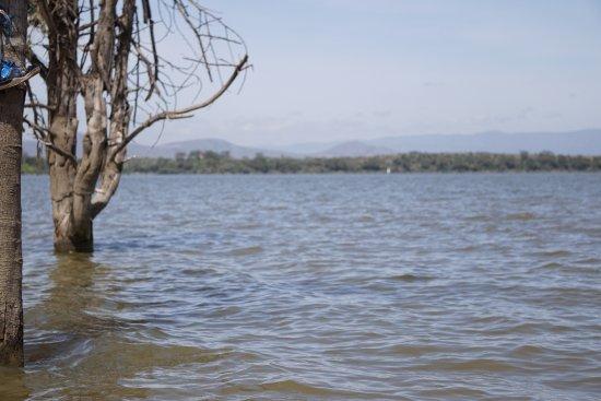 Rift Valley Province, Kenya: Acacia Trees