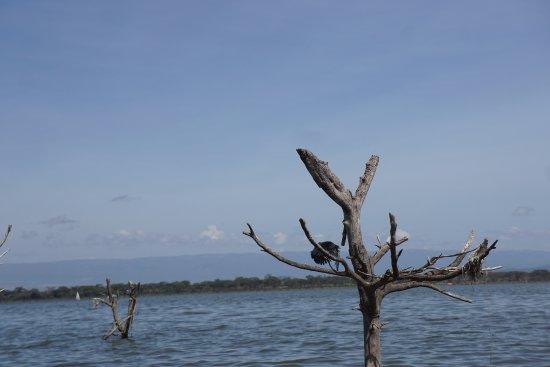 Rift Valley Province, Kenya: Birds