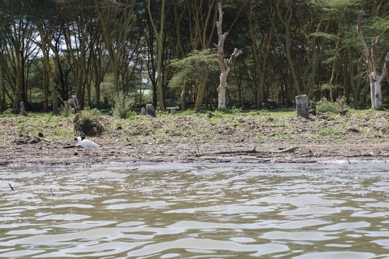 Rift Valley Province, Kenya: Some more birds