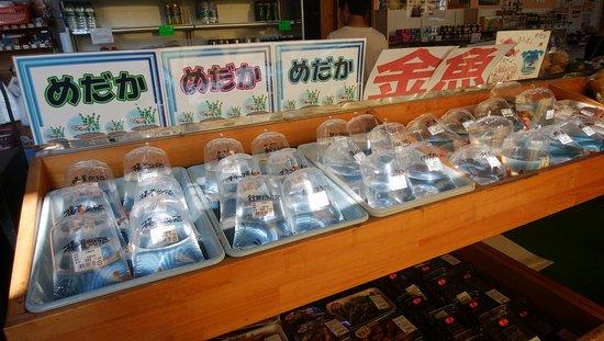 Kazo, Japan: DSC_2137_large.jpg