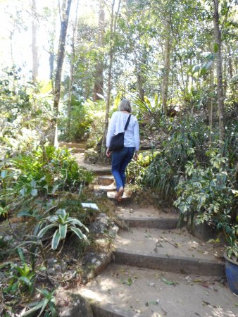 Mount Glorious, Australia: Garden paths need some finesse and fitness to negotiate.