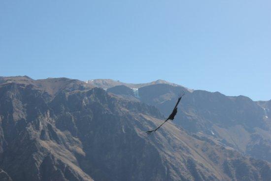 Cabanaconde, Peru: Cima nevada con el vuelo del Cóndor