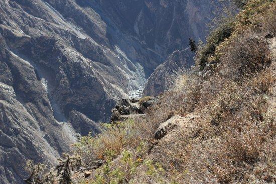 Cabanaconde, Peru: Profundidad del Cañón donde se ve el río Colca