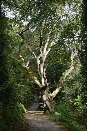 Сент-Остелл, UK: Tree