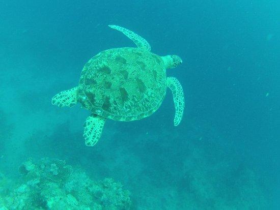 Dzaoudzi, Mayotte: dès la première plongée pour un bapteme