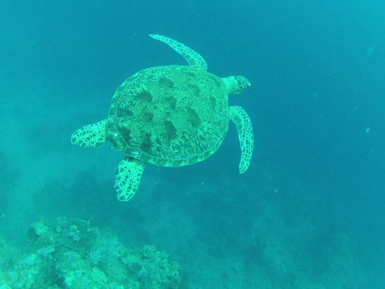 Mayotte Océan
