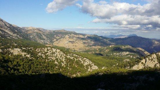 Δάσος Σελάκανο