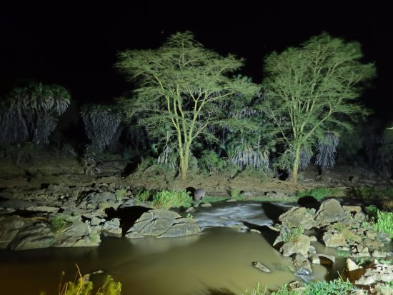 Тсаво, Кения: Un hippopotame qui mange au bord de la rivière (vue depuis le restaurant)